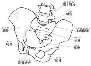 骨盤を正しい位置にもどす方法